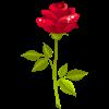 rose 1.png