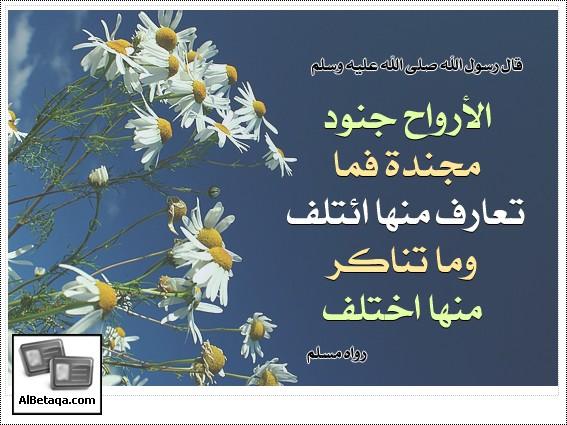 Motanawe3h0063.jpg